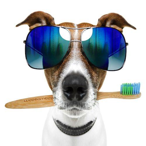 Woobamboo Stor Hund