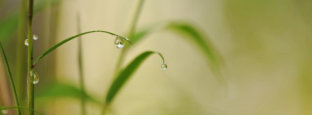 Fjern vanndråper på bladet